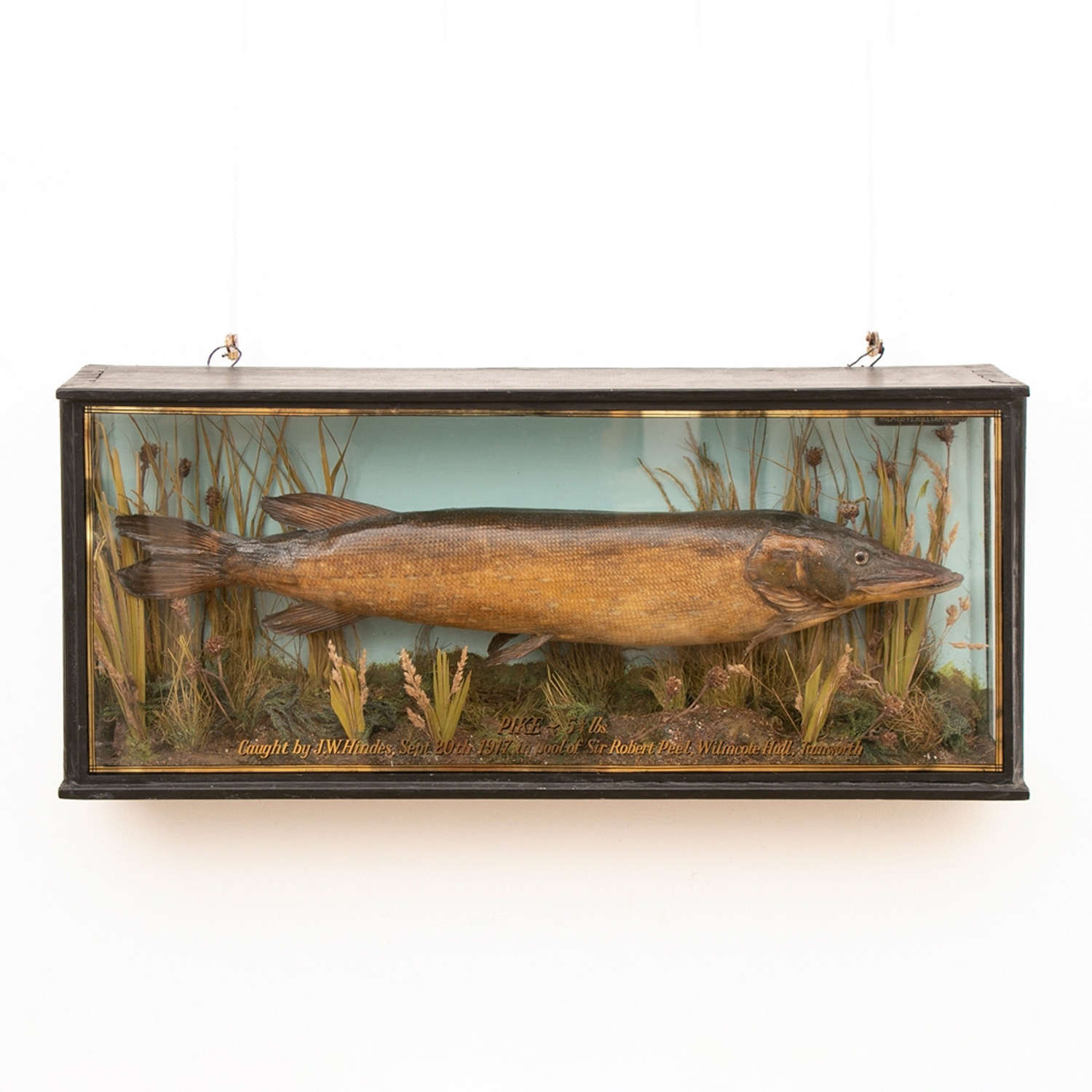 Antique Taxidermy Pike in Glass Case c.1917
